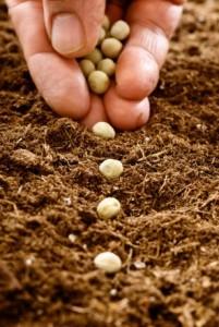 Seeds planting 2