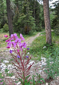 Columbine Inn wildflower path