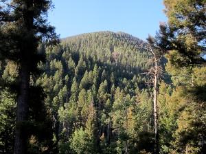 Morning view of ridge
