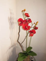 Red flowers in San G.jpg