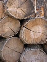 San G wood pile 2.jpg