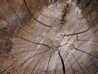 San G wood pile.jpg