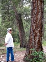 Woods 10.jpg