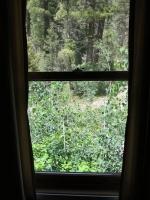 Woods 14.jpg