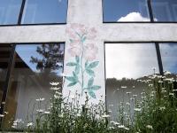 Columbine flowers4.jpg