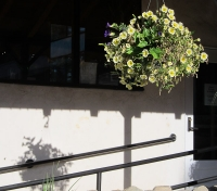 Columbine flowers8.jpg