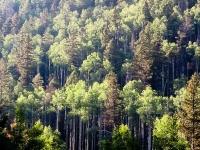 Woods9.jpg