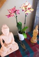 Meditation hall 14.jpg