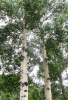 Woods 5.jpg