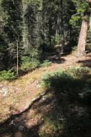 Woods 105.jpg