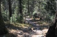 Woods 108.jpg