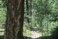 Woods 6.jpg