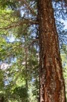 Woods 7.jpg