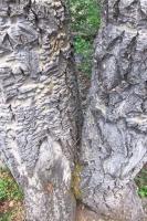 Woods 11.jpg