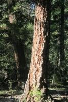 Woods 12.jpg