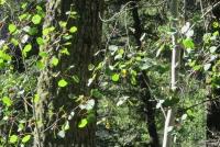 Woods 20.jpg