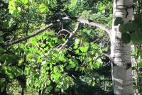 Woods 25.jpg