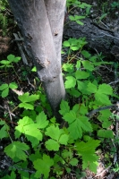 Woods 8.jpg