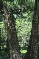 Woods 15.jpg