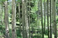 Woods 17.jpg