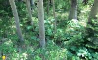 Woods 18.jpg