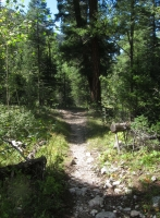 Woods 1.jpg
