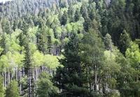 Woods 9.jpg