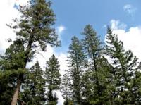 Trees to sky.jpg