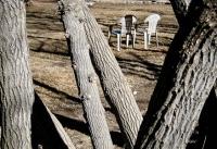 San G trees & lawn chairs.jpg