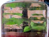 San G water dispenser jar 2.jpg