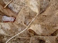 San G winter leaves on path 2.jpg