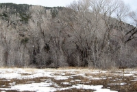 Winter branches in bosque 2.jpg