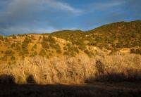 Trees & hills behind San g.jpg